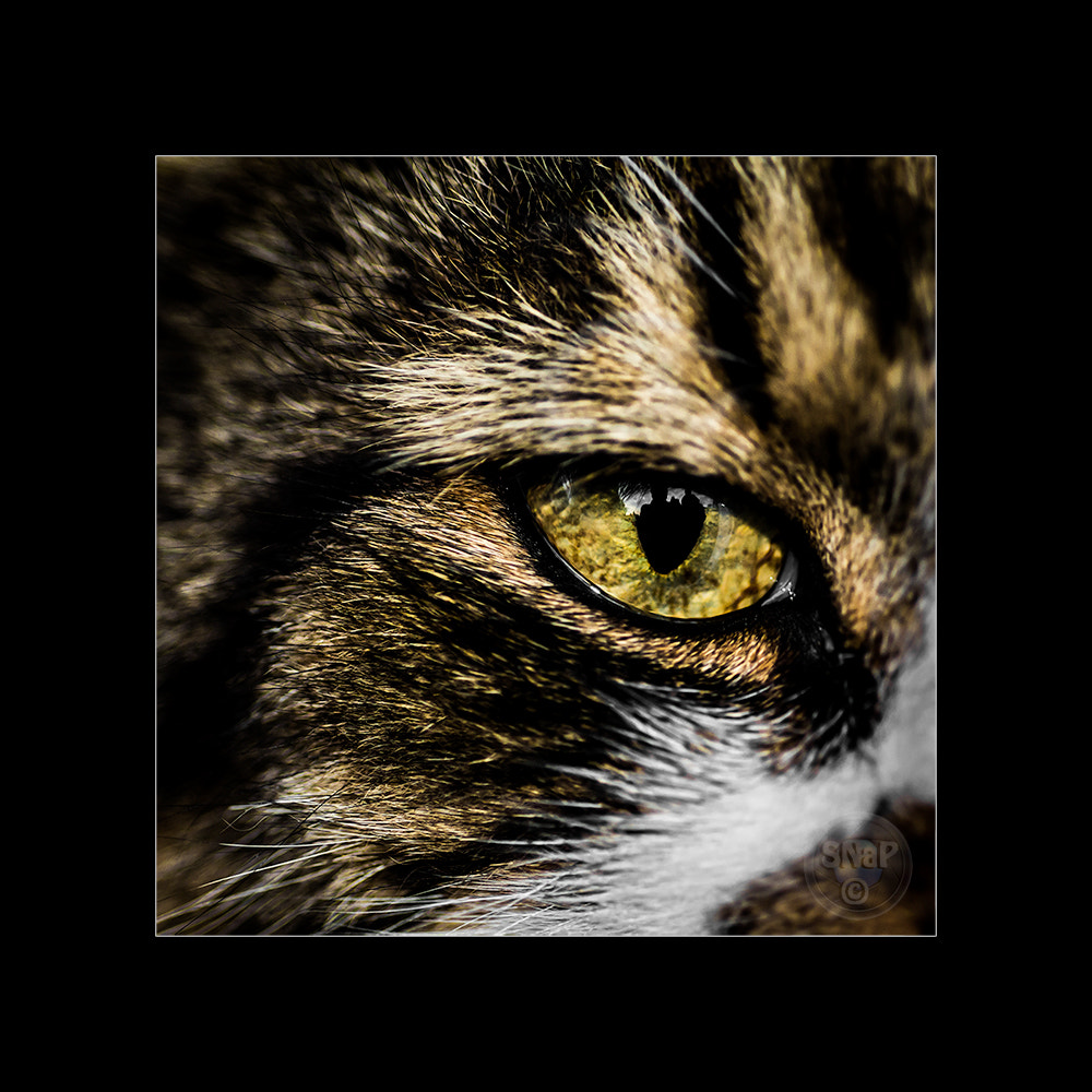 Photograph I got an eye on you! by Stefan Gustavsson on 500px