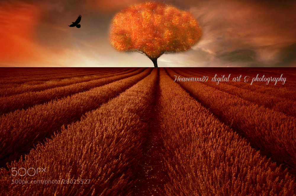 Photograph The Orange Tree  by chrissie  J on 500px
