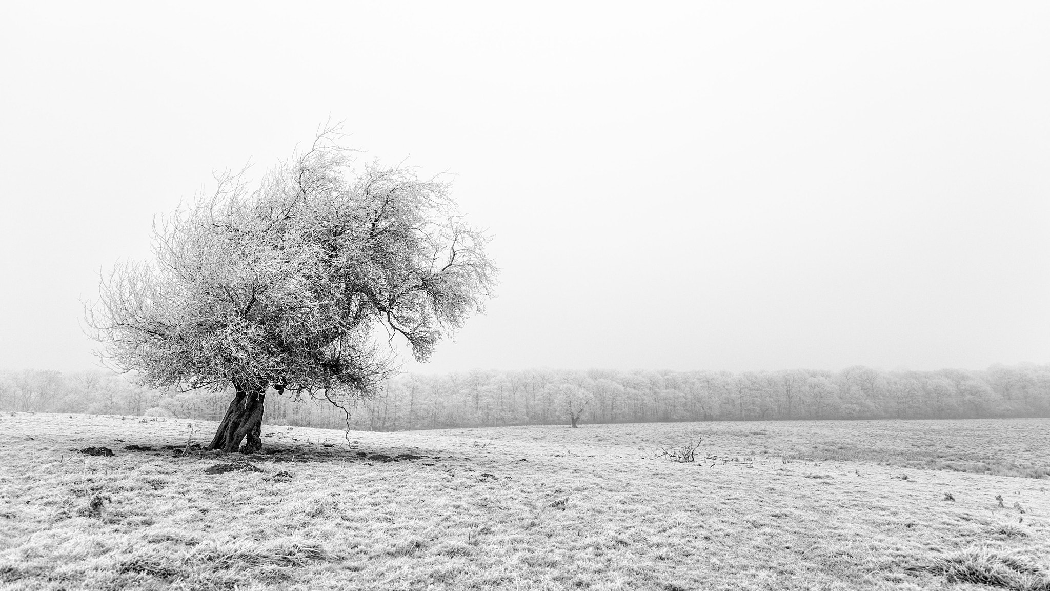 Photograph Hoarfrost Tree by Mike Barber on 500px