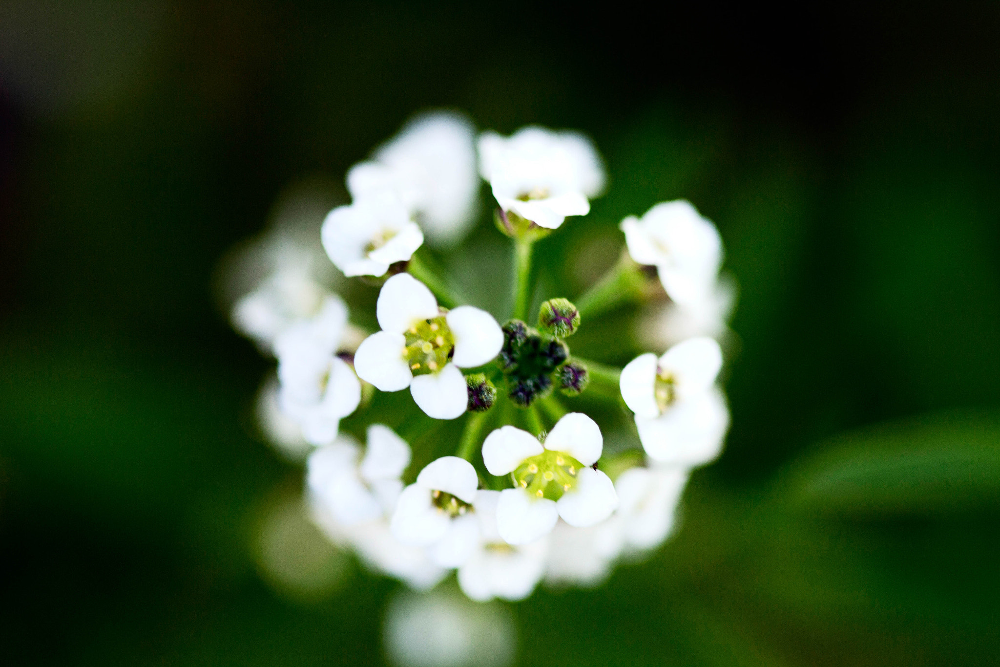 Photograph White Flower by Cameron Smith on 500px