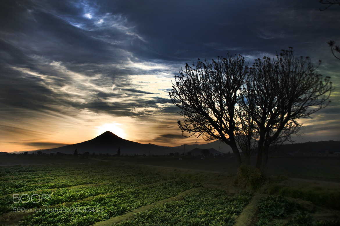 Photograph Spinach field and sunset by Cristobal Garciaferro Rubio on 500px