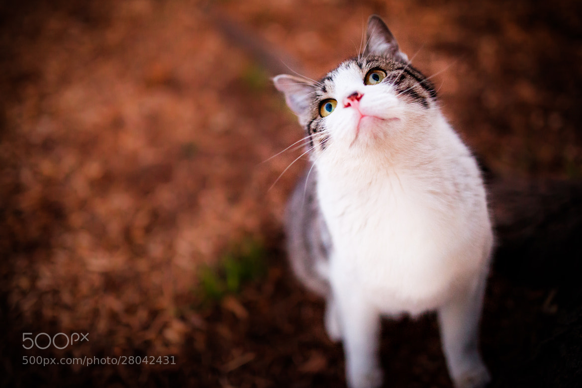 Photograph look up at me by Seiji Mamiya on 500px