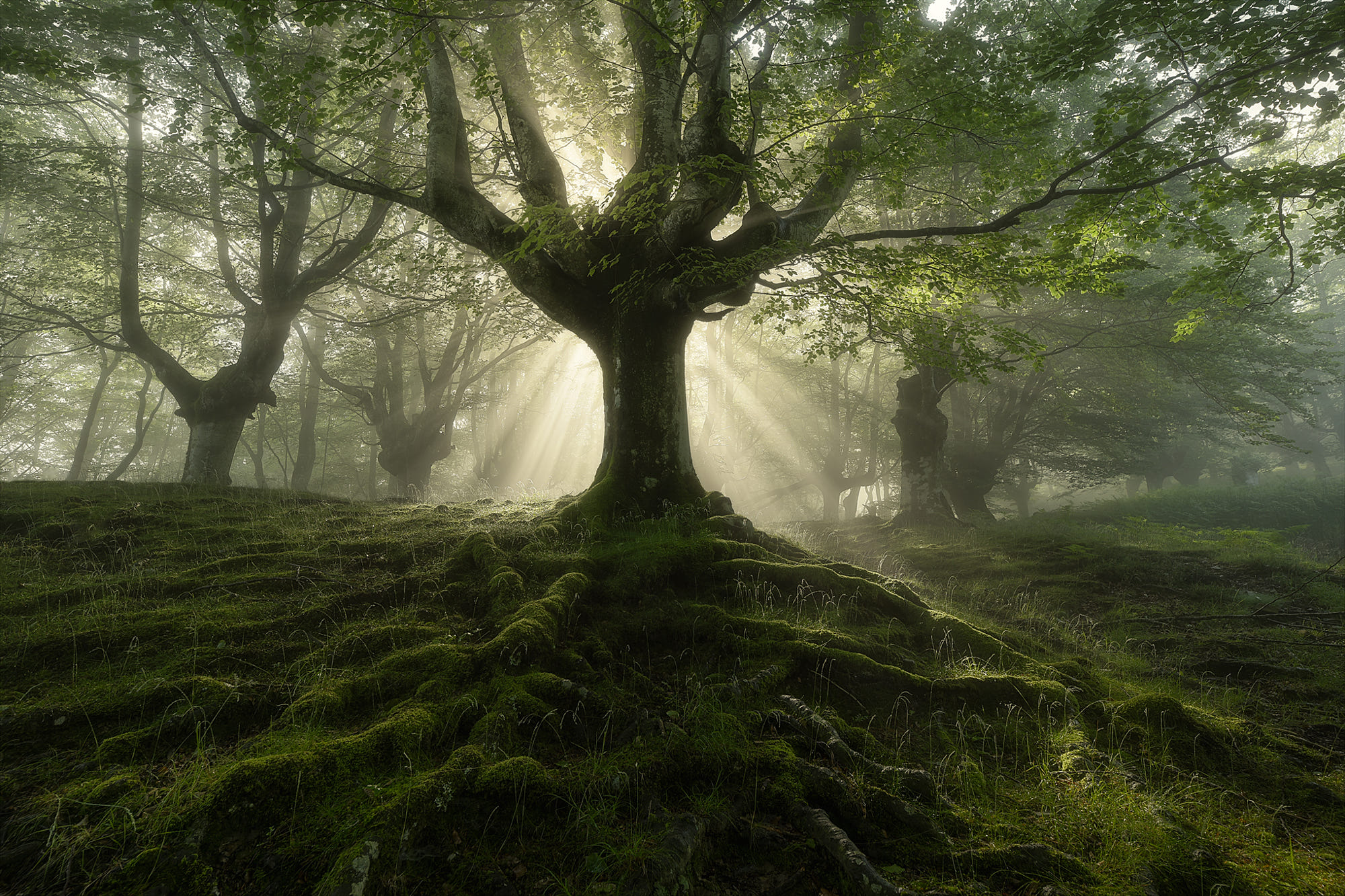 la diosa del bosque