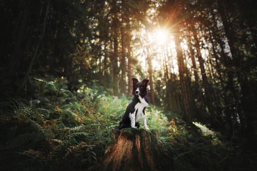Little forest elf by Kristýna Kvapilová on 500px.com
