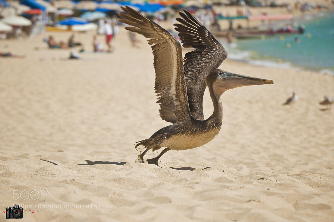 Photograph Take Off! by Neil Young on 500px