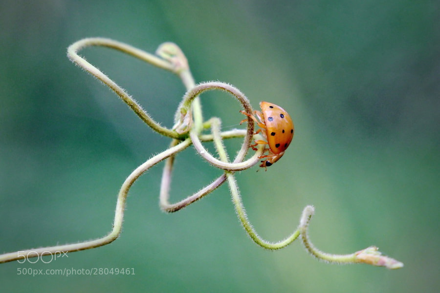 Photograph Ladybugs and ladders.. by Agung Harsono Pirmo on 500px