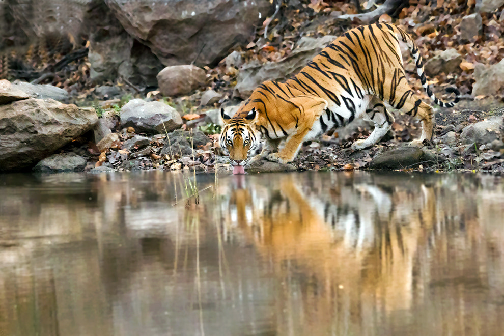Photograph Thirsty... by Amod Sane on 500px