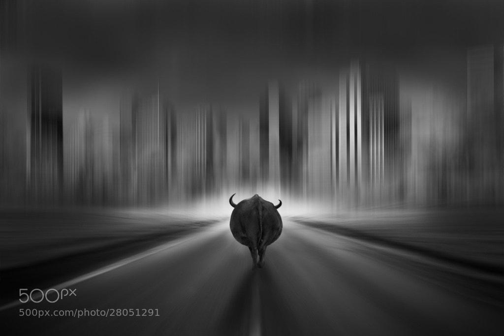 Photograph buffalo dreams by Kittiwut Chuamrassamee on 500px