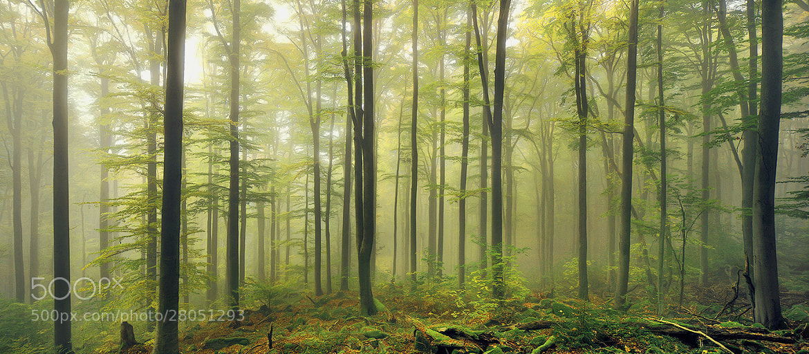 Photograph Green Cathedral by Kilian Schönberger on 500px