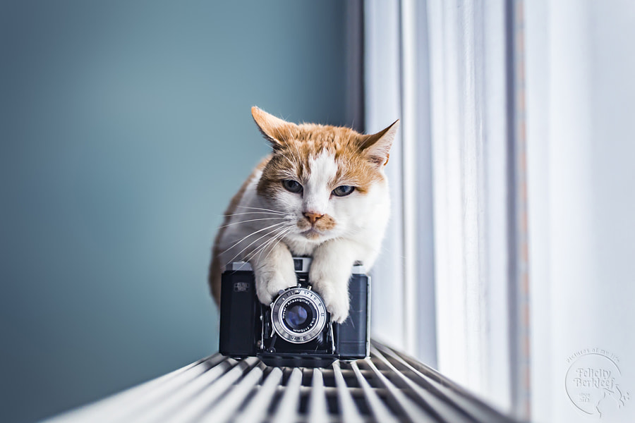 Say Cheese by Felicity Berkleef on 500px.com