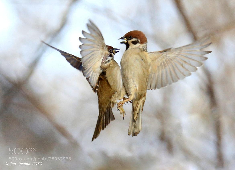 Photograph I love you!. by Galina   Jacyna on 500px