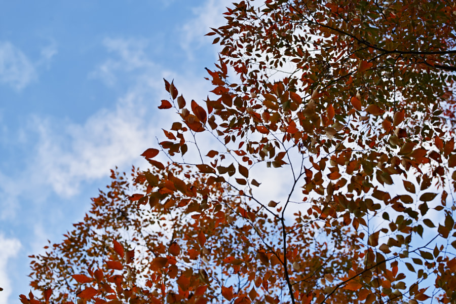 Tanzawa Japan early autumn by fotois you on 500px.com