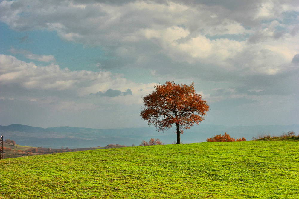 Photograph tree of life by anıl acar on 500px