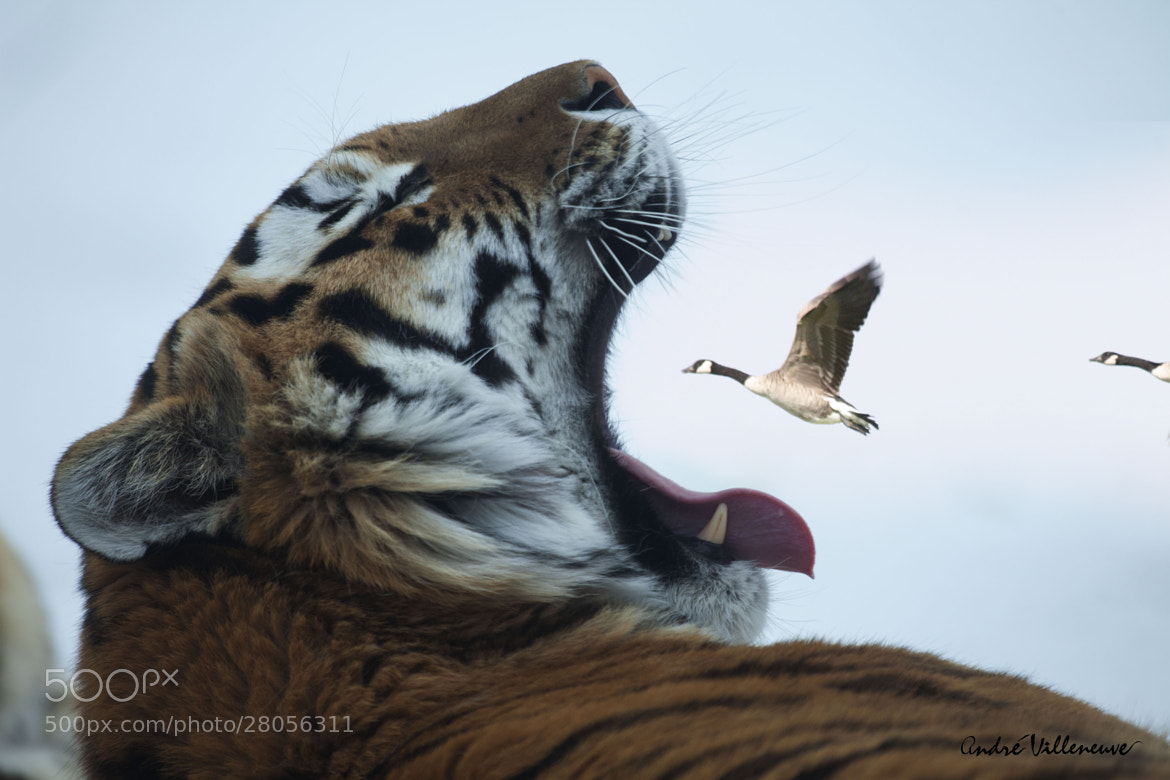 Photograph Fast food by Andre Villeneuve on 500px
