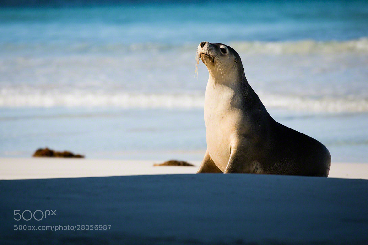 Photograph Seal Bay by Nicole S. Young on 500px