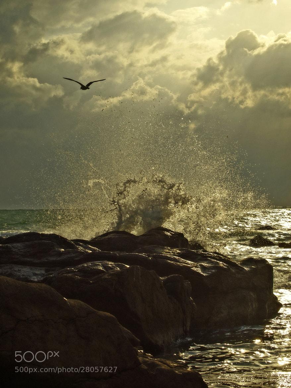 Photograph Splash by Haru Digital phot on 500px