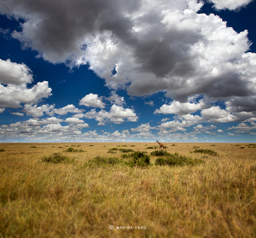 Photograph The Sheltering Sky by Marina Cano on 500px