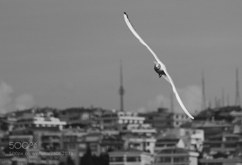 Photograph I'm free by Atilla Aydin on 500px