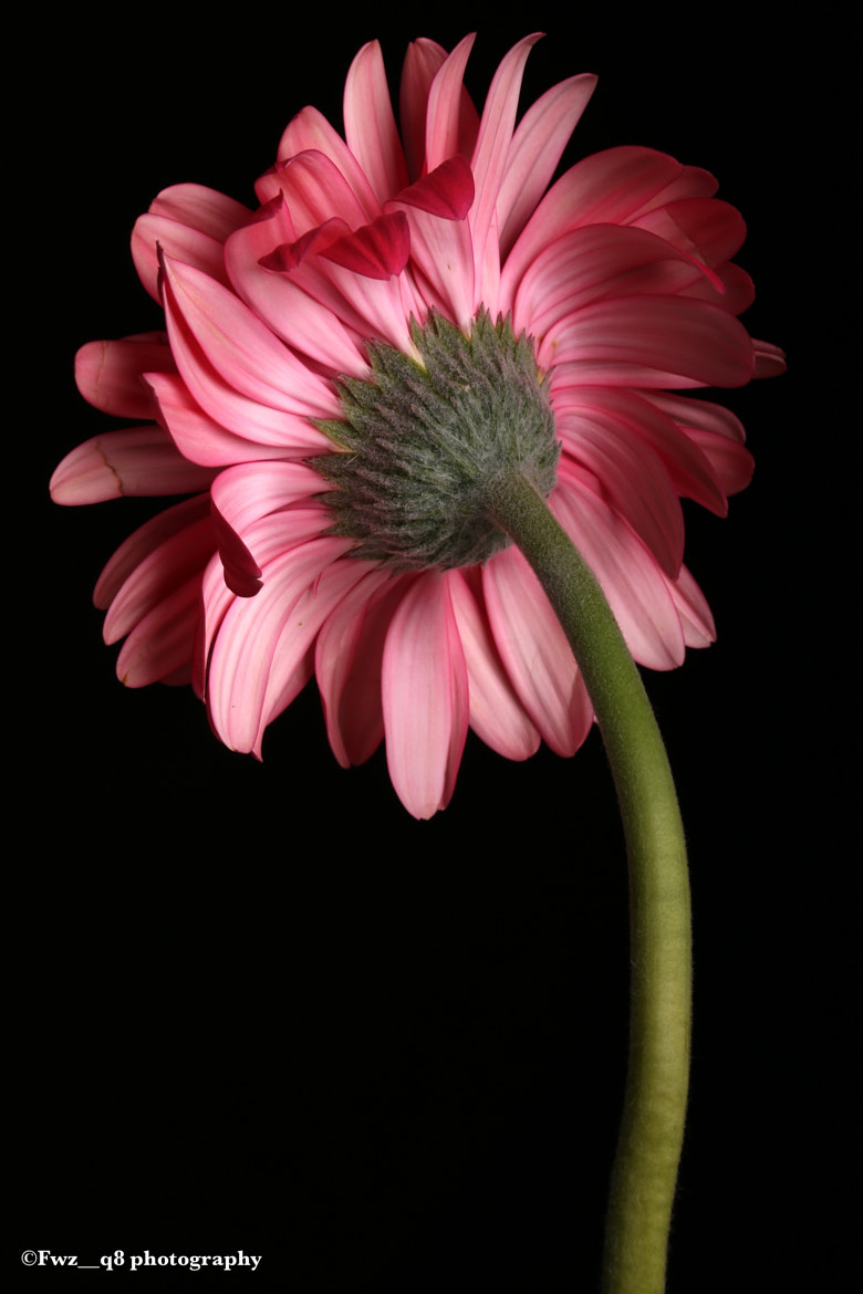 Photograph Flower 2 by Bu_ALFoOoZ  on 500px