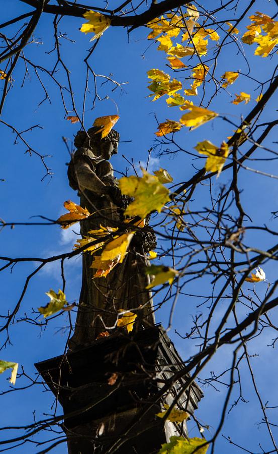 autumn I von dirk derbaum auf 500px.com