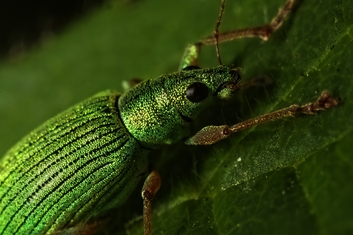 Photograph Bug by Christiaan Slot on 500px