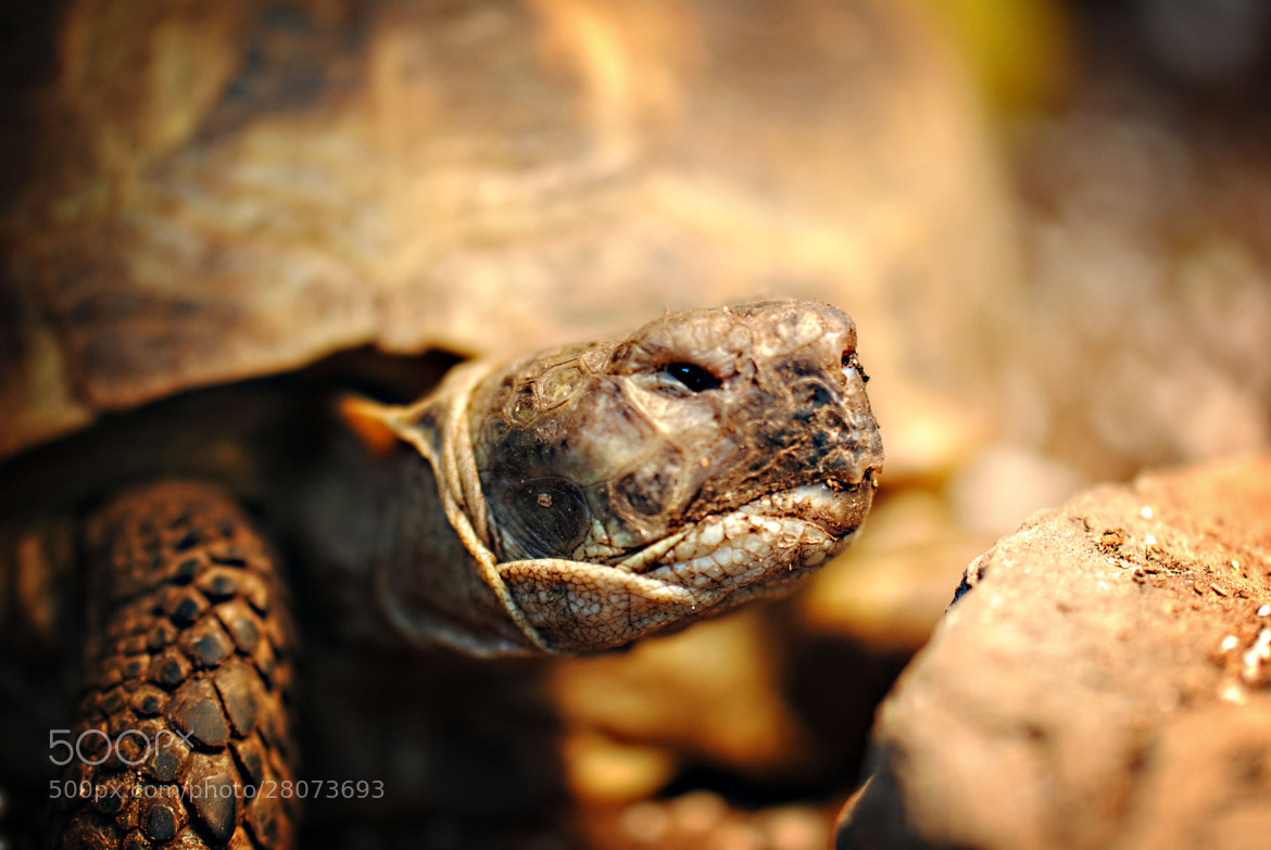 Photograph Grumpy Tortoise by Michelle Yeager on 500px