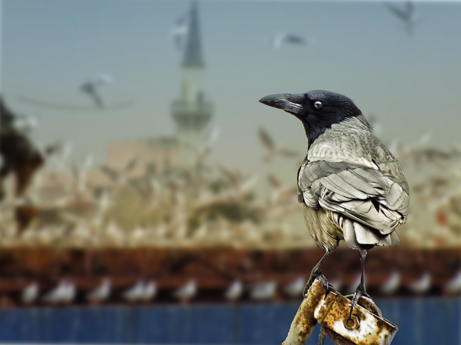 Photograph The Crow by MURAT FINDIK on 500px