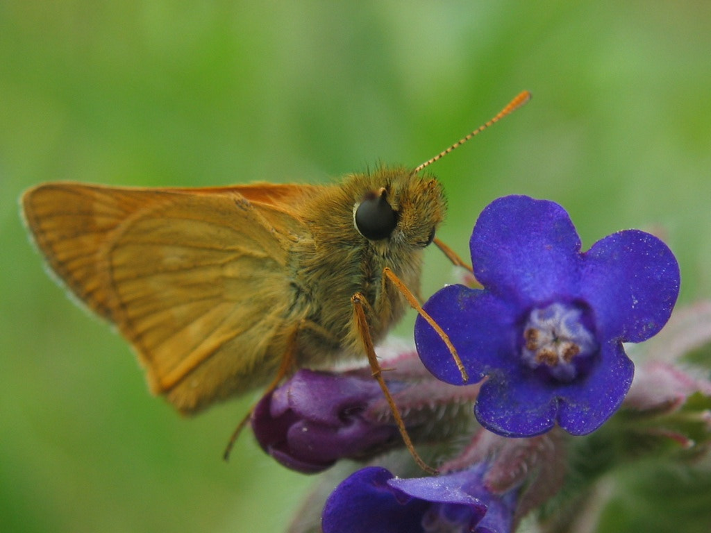 Photograph Skipper  by Olaf Wiesner on 500px