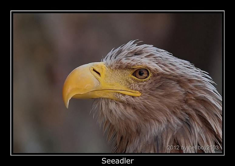 Photograph Seeadler by Jörg David Photography  on 500px