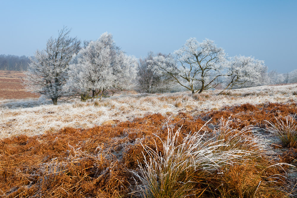 Photograph Hoar frost, Foxlane Plantation, Ramsley Moor - Peak District by Graham Dunn on 500px