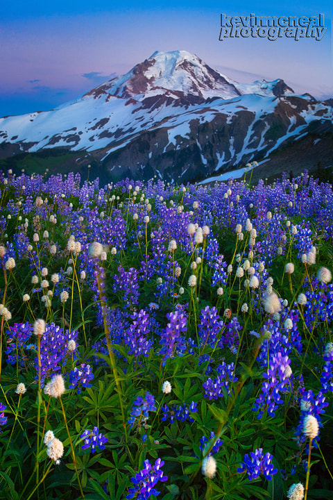 Photograph Mount Baker Wildflowers by Kevin McNeal on 500px