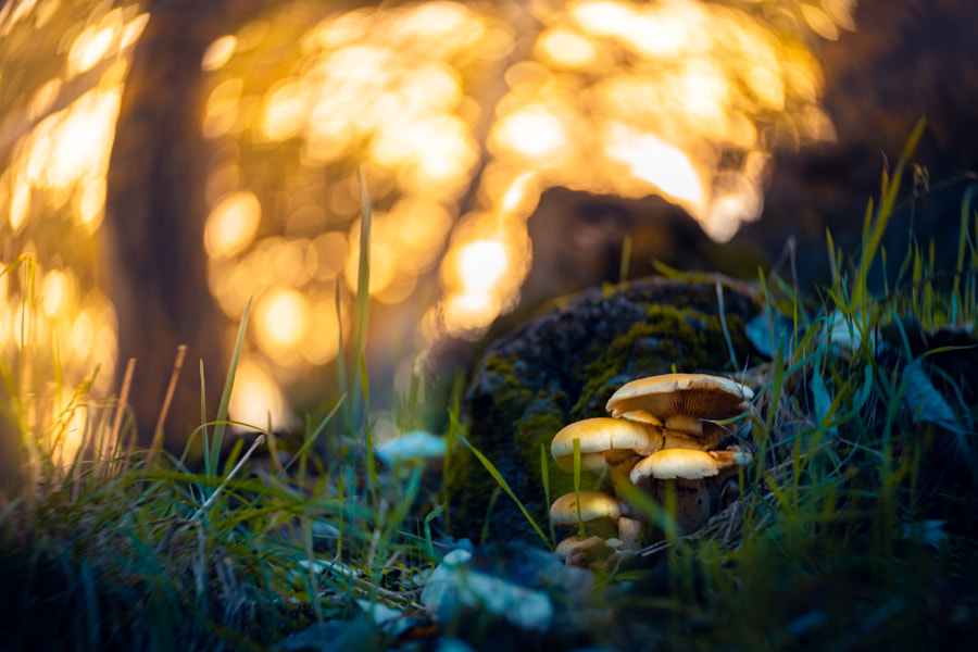 mushrooms in autumn by Ronald Arevalo on 500px.com