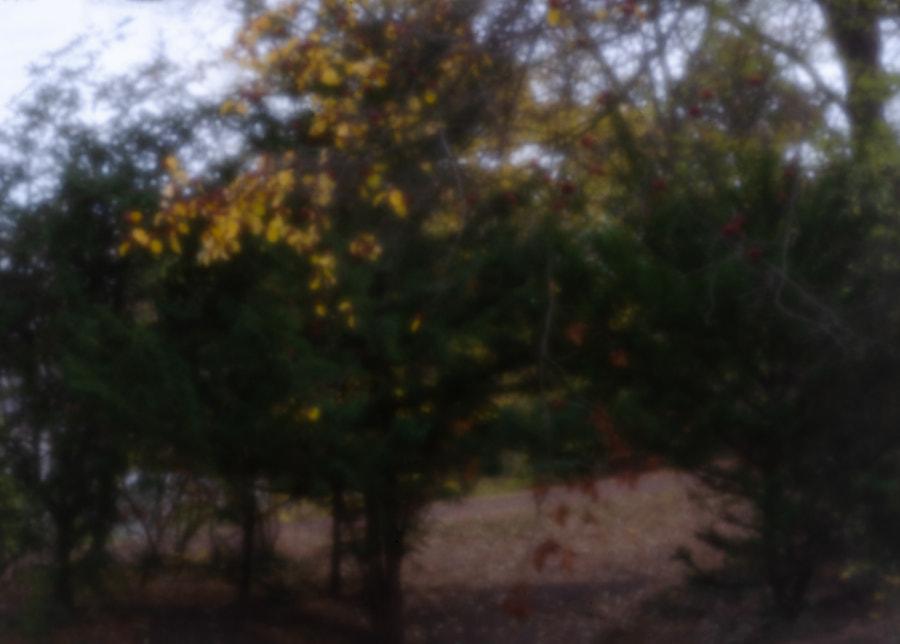 yellow von dirk derbaum auf 500px.com