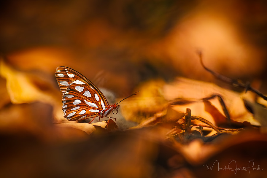 AMONGST THE LEAVES by Mark James Ford on 500px.com