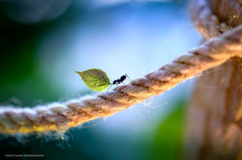Photograph Hard Day's Work by Violet  Kashi on 500px