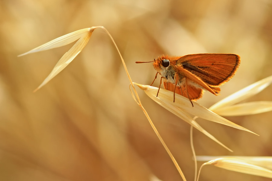 Gold by Necdet Yasar on 500px.com