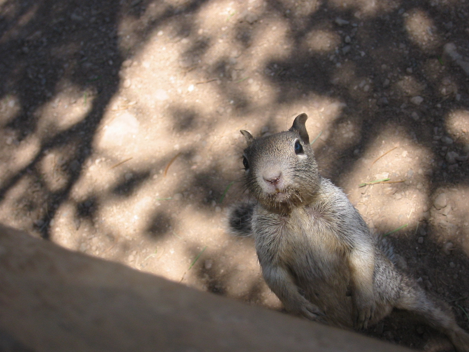 Photograph A squirrel at the Grand Canyon by Fabrice Jazbinsek on 500px