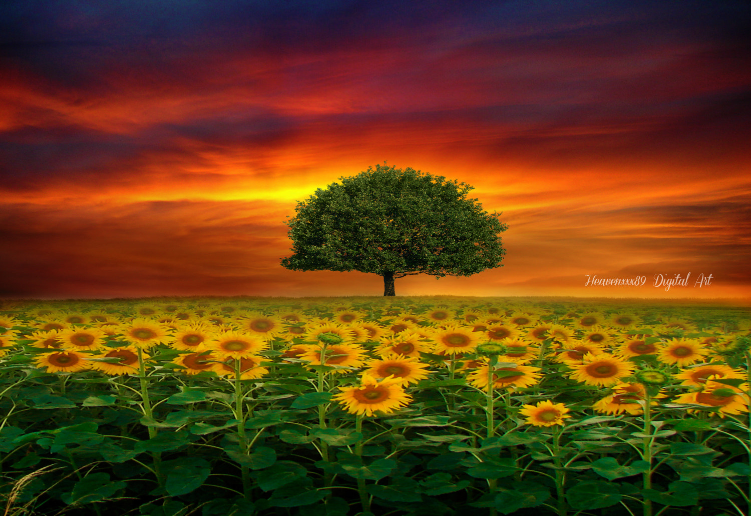 Photograph Peace... is seeing a sunset, and knowing who to thank.   Unknown  by chrissie  J on 500px