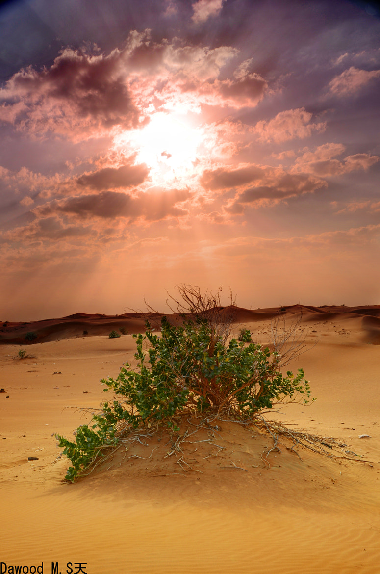 Photograph in the sun shadow by Dawood Afrooz on 500px