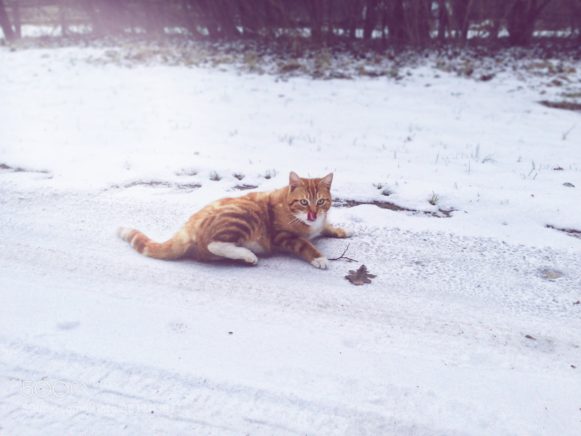 Photograph Cat in the Snow by Florian P on 500px