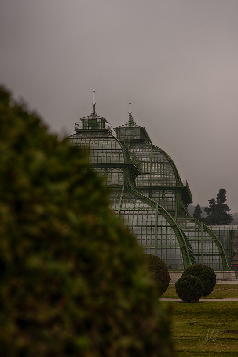 Photograph Palm House by Albin Brunnbauer on 500px