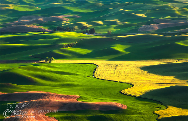 Photograph Rolling Green Palouse Hills by Zack Schnepf on 500px