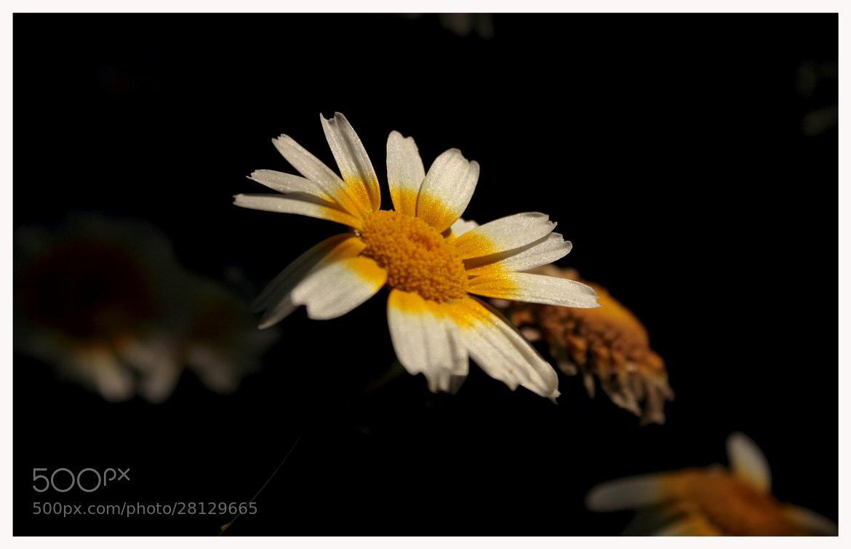 Photograph flore luteo by BAIDYANATH ARYA on 500px