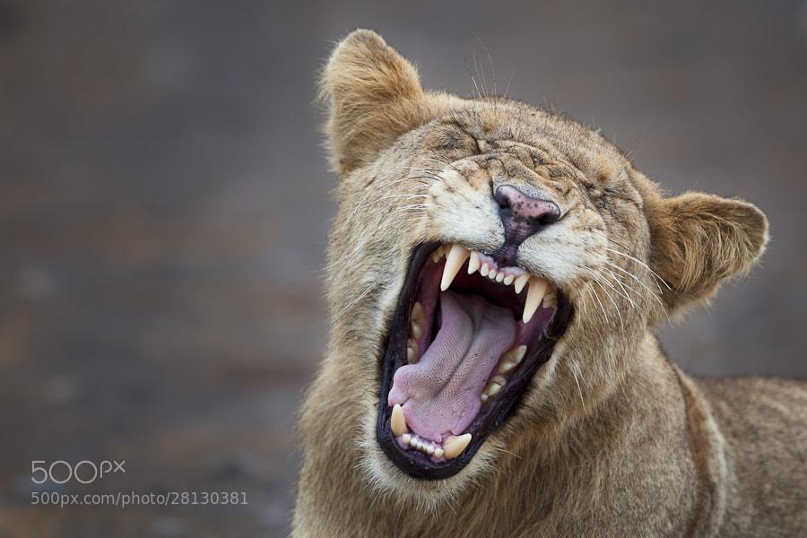 Photograph Fierce Yawn by Mario Moreno on 500px
