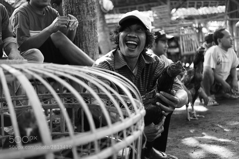 Photograph Cockfighting Enthusiast by Daniel Kurniawan on 500px