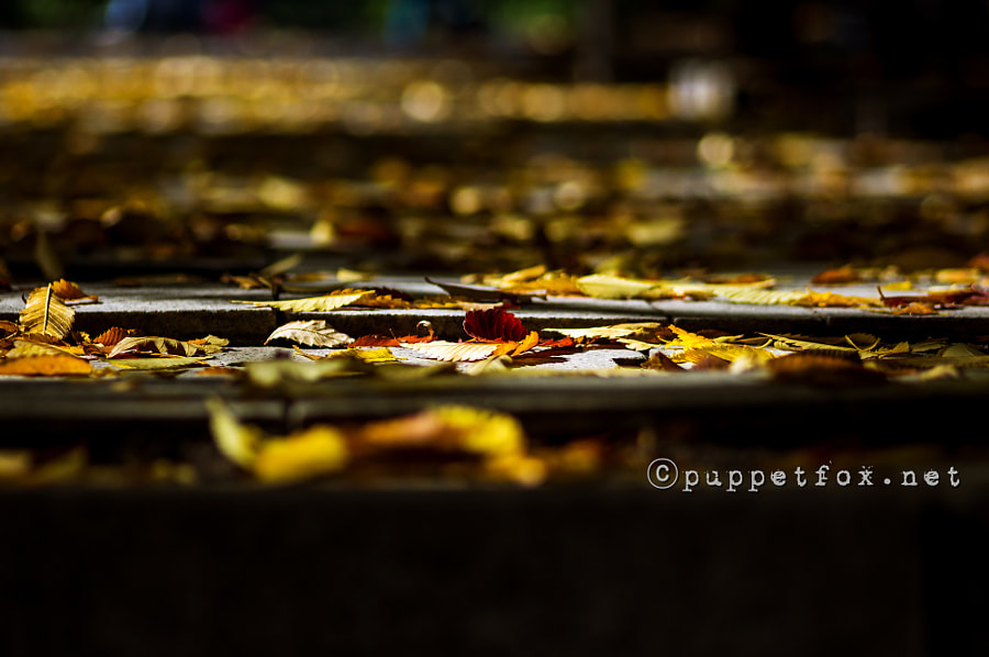 Fallen leaves under the autumn light by Jason J. Hong on 500px.com