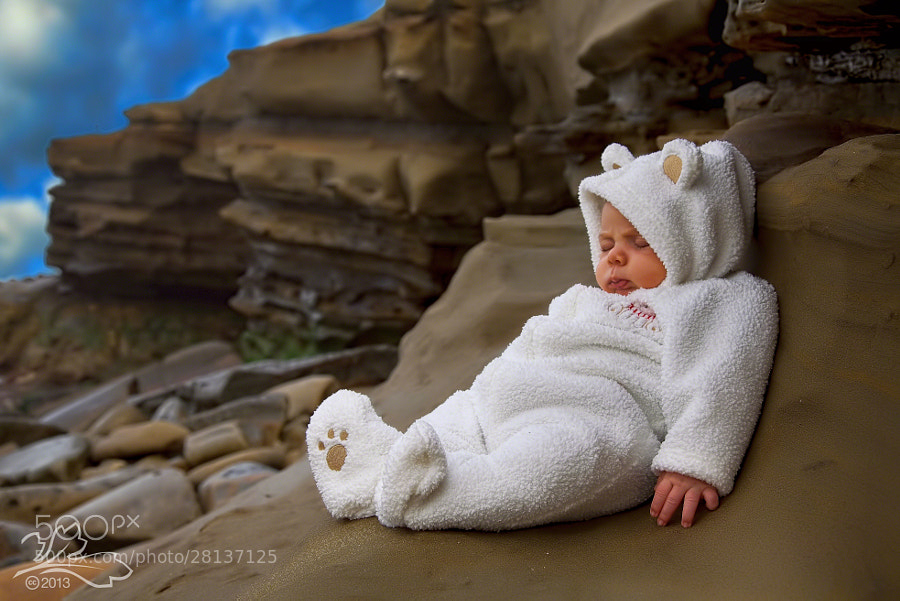Infant-bear on the rocks