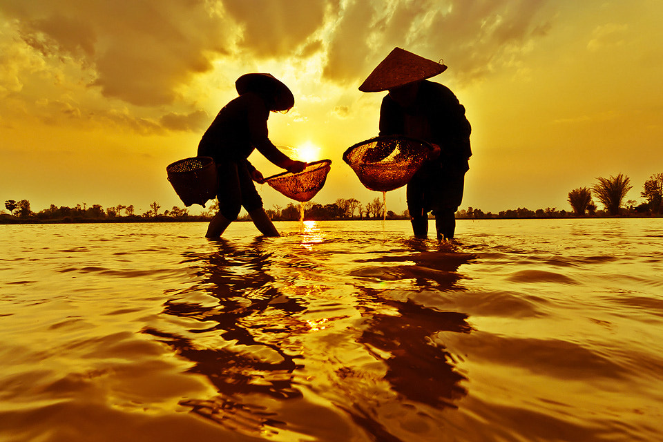 Photograph This is a ซ่อนเหนี่ยว by Chanwit Whanset on 500px