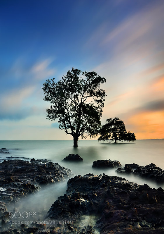 Photograph The Tree by Ade Rinaldi on 500px