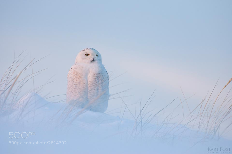 Photograph Snowy at Sunset by Kari Post on 500px